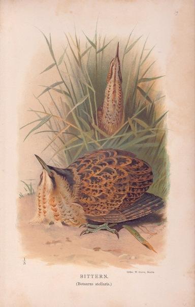 ArchibaldThorburnCa1885